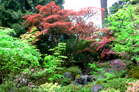 Japanese Garden - Portland - OR - May 10 2010 009