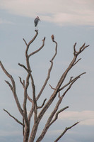 Stork - Tanzania - March 13 2014