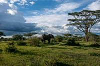 Elephants - Tanzania - March 15 2014
