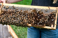 Shelley Rice - Beekeeper - May 23 2015 047