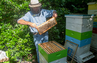 Mark Anderson - Beekeeper - June 4 2015 035
