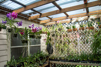 Orchid Obsession - July 9 2015 045