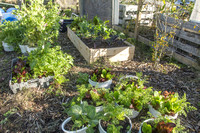 Last Organic Outpost - demo garden - Jan 30 2016 024