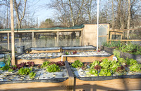 Last Organic Outpost - aquaponics - Jan 30 2016 008