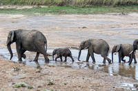 Elephants - Tanzania - March 10 2014